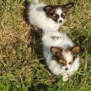 Joni & bratec Jolly, 10 tednov