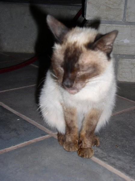Kitty - foto povečava