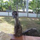 radovedni emu