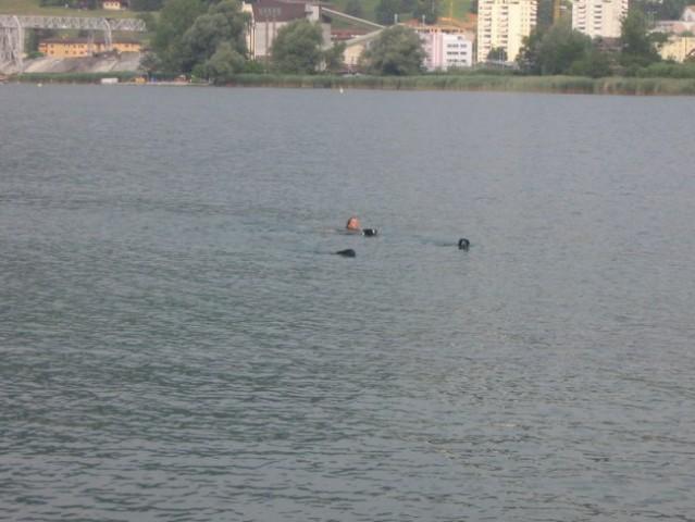 Kopanje v jezeru pri Luzernu ( jaz in kuže)