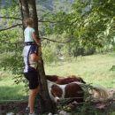 Konji v Bavščici