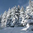 Čudi me, da se pod težo snega ne polomi vse skupaj