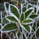 Še so vidne posledice hladnega jutra
