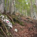 Strm gozd nas že na samem začetku dodobra segreje :)