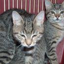 Strelko in Grizli, 4-mesečna samčka,  iščeta dom. Kontakt: 041/606-166