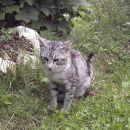 Pred enega izmed vikendov v Bohinju (Soteska) se je zatekel prijazen muc. Prilezel je iz b