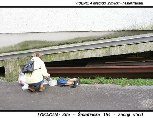 LOKACIJA: Žito - foto
