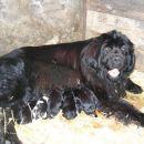 Prva slika mamice z mladički