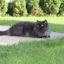 Maca se sonči