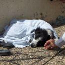 Flo, the dog :)