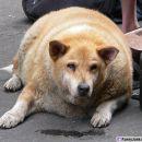 bogi pes kdo ga tako hrani