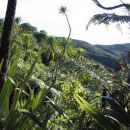 NZ gozd oz. zakaj oni temu rečejo bush