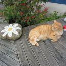 On, Zlatko, backpackerski maček težak vsaj 8kg