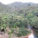 džungla, deževni gozd
