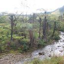 džungla oz. NZ gozd