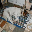 Spim v kuhinji