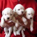 Tri bele