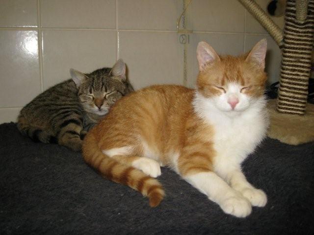 Softy & Smoothie v novem domu! - foto