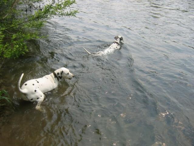 Gremo plavat!