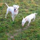 Bela&Rudi