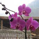 moja orhideja