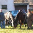 Zbirali so se konjeniki