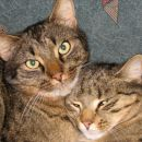 Mikica & Moki