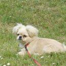 Uživam v travi