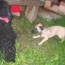 Tole pasjo ''omo'' bom že pripravila do tega, da se bo igrala z mano...