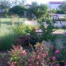 rože in vrt