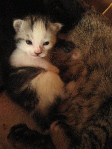 Kittens - foto