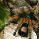 in še en pajek