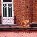 Maček, Arequipa.