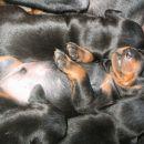 Spike spokojno spančka - 2 tedna star po papcanju