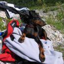 Casper na pol poti na planinarjenju