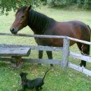 Casper izziva novega prijatelja k igri...