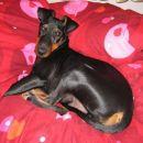 Casper je shecal lastnico, da zamenjata postelji