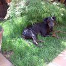 Atos-Ajax uživa v svoji vrtni rezidenci