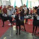 Eurodog show Zagreb