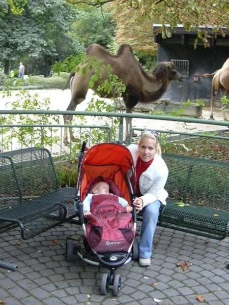 Kamele v živalskem vrtu (Karlsruhe) sem prespal :-)
