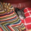 tako vedno spim! Res mi je zelo težko, a ne? :P