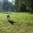 Greyhound Moo v novem domu