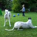 Tara in Moo na vrtu v druzbi otrok