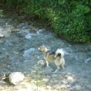 pasje poletje 2007