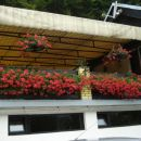 rože iz Podnarta