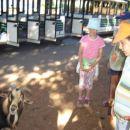 Pozdravit so nas prišle Brionske koze :-)))