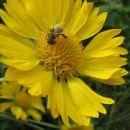 moji amaterski posnetki cvetja