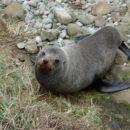 eden izmed lokalcev na naši poti čez južni otok :)