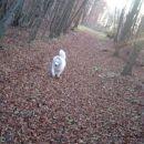 Kot v parku, v resnici pa sredi gozda!