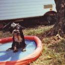 Peljali so me tudi na morje, a tam je preveč vode! Imam raje svoj privatni bazenček.